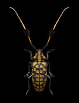 Bug III by Edo Kars