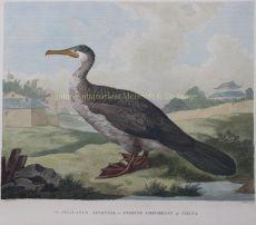 Chinese fishing bird after William Alexander by William Alexander