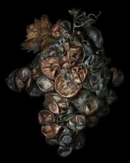 Noble Rot 14 by Peter Lippmann