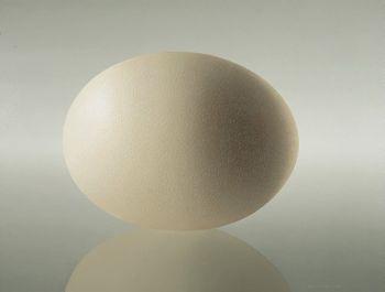 Ostrich Egg I by Olav Cleofas van Overbeek