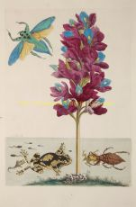 Water plant with water scorpion, frogs and waterbeetle  by  Maria Sibylla Merian