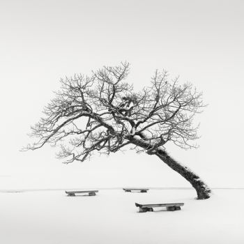 Leaning Tree with Benches by Wilco Dragt