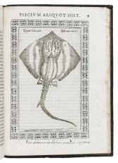 One of the earliest herbals with etched plates by Fabio Colonna