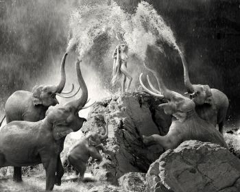 Fountain Of Life by Cheraine Colette