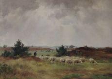 Sheep herd in the field