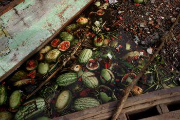 Watermelon by Shen Wei