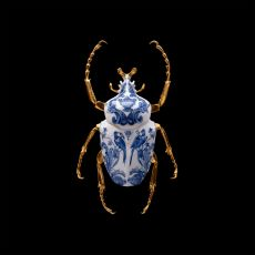 Anatomia Blue Heritage - Goliath Beetle Closed Wings by Samuel Dejong