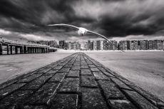Seagul by Koen Hillewaert