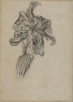 Lily by Piet Mondriaan