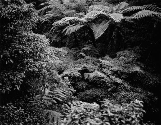 The Nurturing Island #2 by Emily Bates