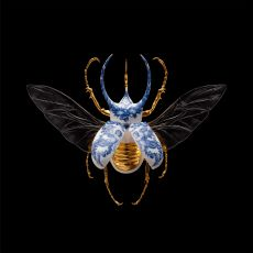 Anatomia Blue Heritage - Atlas Beetle Open Wings by Samuel Dejong