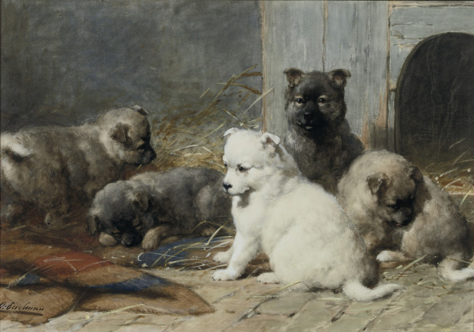Lovely young puppies by Otto Eerelman