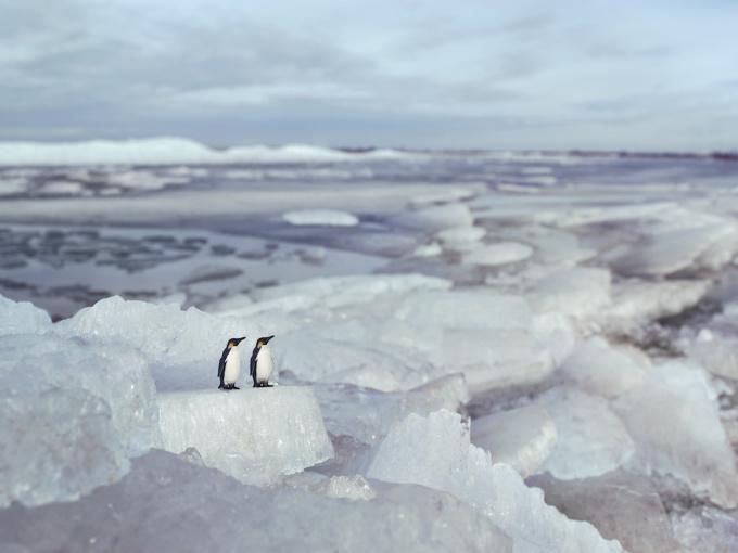 Emperor Penguins - Hindeloopen Holland by Erik Hijweege