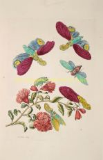 Pomegranate blossom with lanternflies by Merian, Maria Sibylla